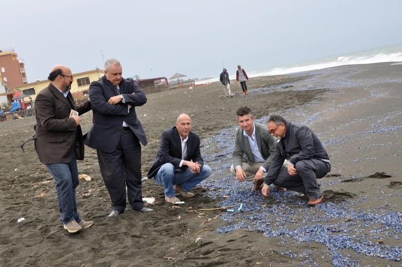 Matrimonio Spiaggia Ladispoli : Ladispoli meduse blu niente di preoccupante lagone