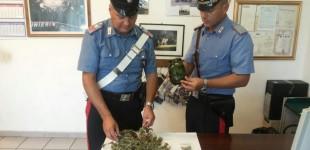 Anguillara: arrestato un 22enne per coltivazione di canapa indiana