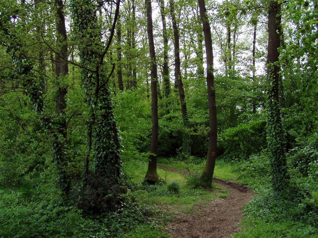 Cerveteri operazione bosco pulito 2014 lagone for Case moderne nei boschi