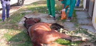 Campagnano: un lager per cavalli a cielo aperto