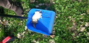 """Bracciano: rinvenuti animali morti nel giardino dell'Istituto """"Silvestri"""""""