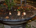 Oriolo Romano: a settembre XIII sagra del fungo porcino