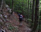 """Consiglio Lazio, ok a regolamento monumento naturale """"Bosco Faito"""""""