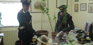 Manziana, carabinieri arrestano un ragazzo con 7 piante di marijuana