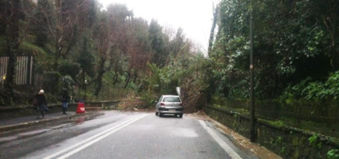 """Municipio XV. Frana Cassia, Torquati: """"Situazione delicata, indagine conoscitiva in aree private"""""""