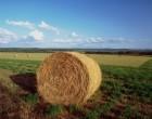 """Regione Lazio, Ricci: """"Assegnato un supplemento di carburante agevolato per gli agricoltori"""""""