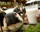 Prezzo latte, Minnucci: bene Regione, ma ora misure concrete per gli allevatori
