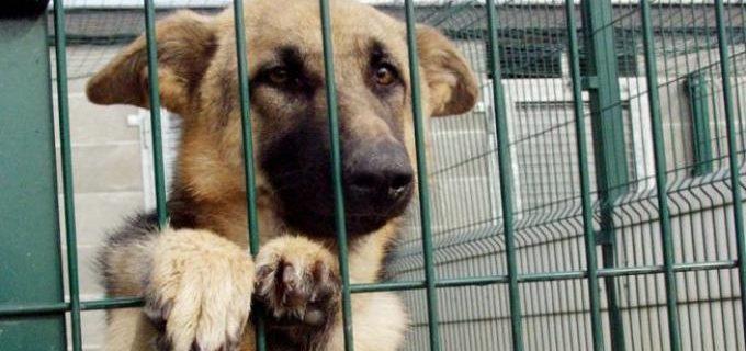 Tolfa, canile lager: 50 cani in pessime condizioni