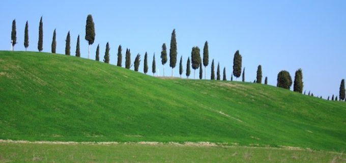 """Campagnano: """"Giorniverdi sulla Via Francigena – Gli Alberi Parlanti"""""""