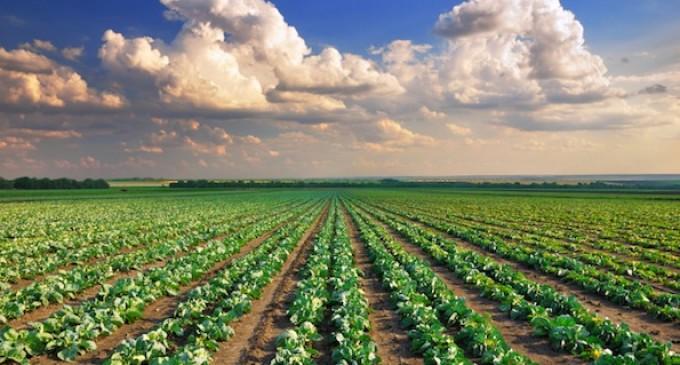 Sindaco Bruni: no all'Imu per i terreni agricoli
