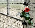 Giorno della Memoria: 70 anni dalla liberazione di Auschwitz