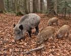 Fauna selvatica, Regione Lazio: approvato il programma operativo annuale 2016