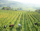 """Agricoltura, Ricci: """"Il patrimonio agricolo del Lazio per lo sviluppo delle multifunzionalità"""""""