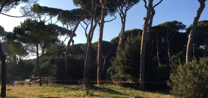 """Municipio XV, Torquati-Rollo (PD): """"Richiesto intervento vigili del fuoco per pino pericolante in via della Stazione di Cesano"""""""
