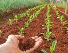 """Bracciano, Istituto superiore """"Salvo D'Acquisto"""" apre le porte alla formazione agraria"""