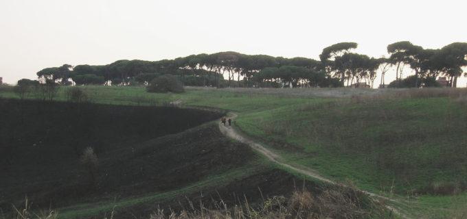 """Municipio XIV, domani iniziativa """"Più verde di Prima"""" al Parco del Pineto"""