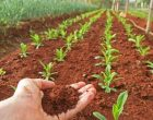 Oriolo Romano: incontro sul Piano di Sviluppo Rurale del Lazio 2014-2020