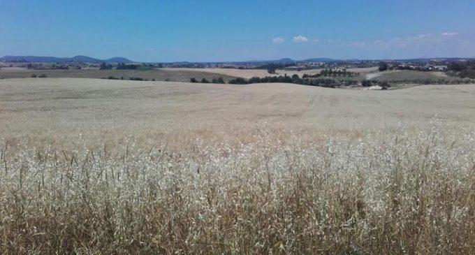 Cerveteri, l'Assessore all'Agricoltura Riccardo Ferri: 'bene la Regione Lazio sulle modifiche al Regolamento in materia di controlli e procedimenti amministrativi in agricoltura'