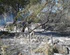 Canale Monterano, in due settimane bruciati circa 30 ettari di territorio