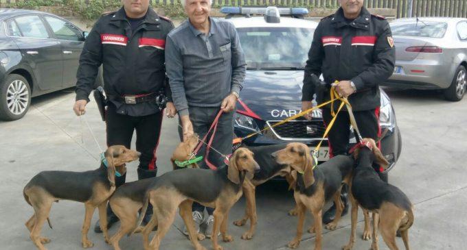 Ruba sei cani di razza da un allevamento e rimuove il microchip: denunciato