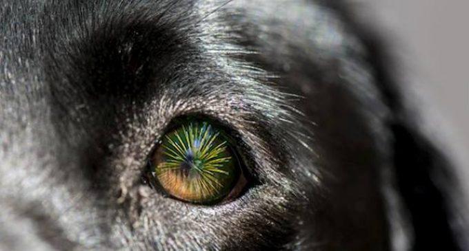 Proteggiamo i nostri animali dai botti di Capodanno: i 10 consigli dell'Oipa