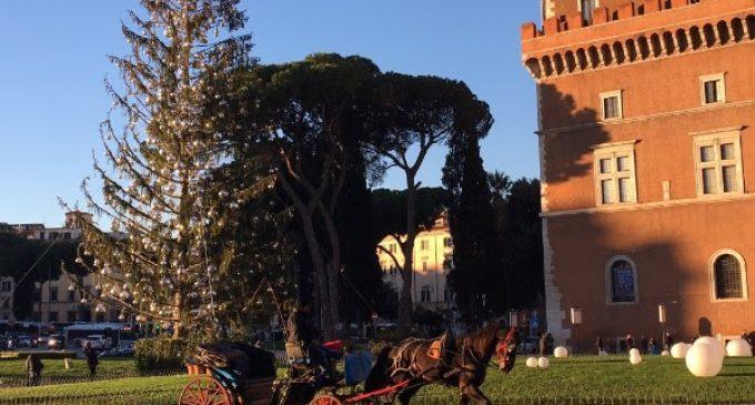 Da Spelacchio a Vittorio, gli alberi di Natale hanno sempre una seconda vita