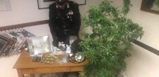 Anguillara, coltiva marijuana in camera da letto: in manette un 25enne del posto