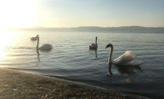 Bandiere blu nel Lazio: premiato il lago di Bracciano