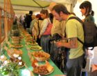 Arriva la prima Sagra del Fungo a Bracciano Sabato 6 e domenica 7 Ottobre