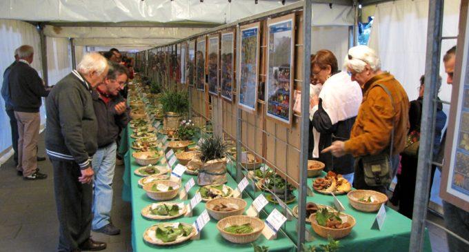 A Bracciano il 13 e 14 Ottobre la XVIII edizione della Mostra del Fungo