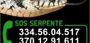 Cerveteri, un servizio gratuito di identificazione e recupero dei serpenti