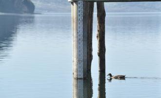 Lago: migliorano le condizioni di salute di piante e animali