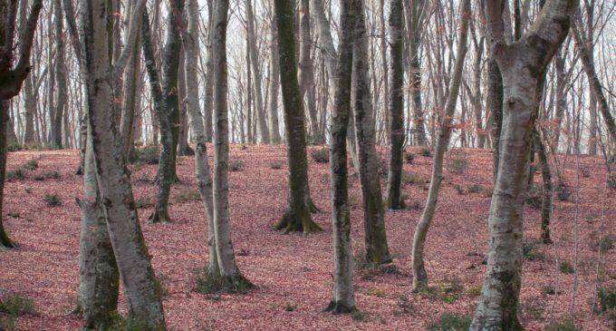 Tesori Naturali 2019 – Attraverso il bosco incantato