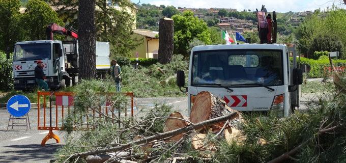 Trevignano: lavori di messa in sicurezza su via della Rena. Abbattuti 23 alberi
