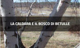 La Caldara e il bosco di betulle