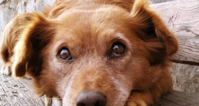 Ladispoli: Bonus fino a 400 euro per chi adottaun cane dal canile comunale, pubblicato l'avviso