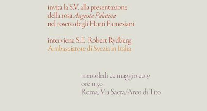 """Roma 22 maggio: IlParco archeologico del Colosseopresenta la nuova varietà di rosa """"Augusta Palatina"""""""