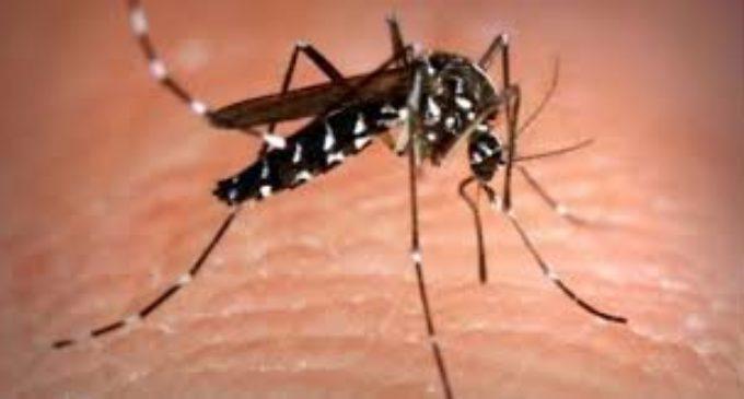 Cerveteri: Al via il ciclo di disinfestazione da zanzara e zanzara tigre – Passaggi in tutto il territorio comunale.