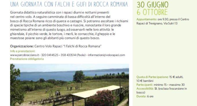 Tesori Naturali: Una giornata con falchi e gufi di Rocca Romana