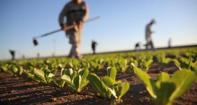 Lazio, Aula approva legge per il contrasto al lavoro irregolare in agricoltura