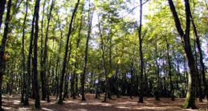 """Agosto: proseguono le attività dei """"Tesori Naturali 2019"""""""