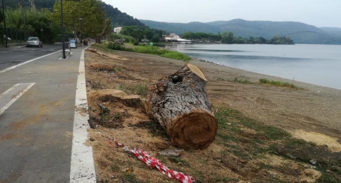 Bracciano, esposto/denuncia per mancata sicurezza dei lavori di potatura e abbattimento alberi Lungolago G.Argenti