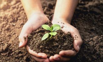 Manziana: Inizia un nuovo anno scolastico, come benvenuto 500 sporte con compost e semi da piantare