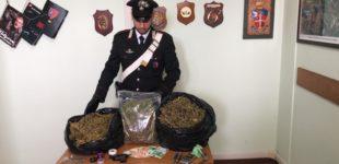 Arrestato coltivatore illegale di Marijuana