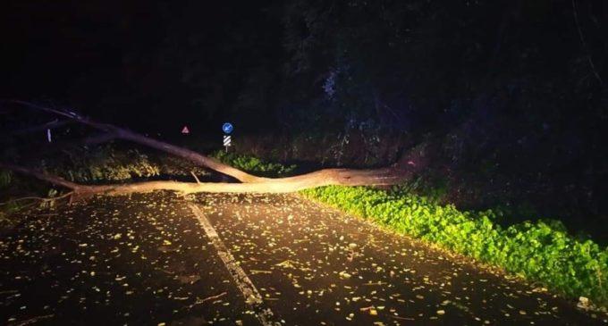Maltempo: Alberi caduti e case allagate tra Bracciano e Manziana