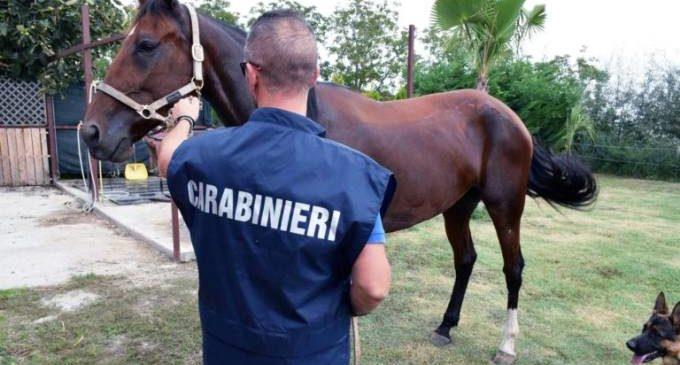 Bracciano: Due arresti e un maneggio multato