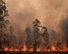 Incendi Australia: Oltre 180 persone sospettate di aver appiccato gli incendi boschivi
