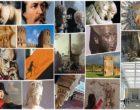 """#laculturanonsiferma, in un video la collezione archeologica di Palazzo Valentini. Zotta: """"Uno scrigno nel cuore di Roma"""""""