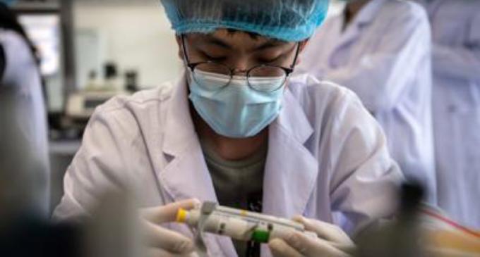 Cina, scoperto nuovo virus 'con potenziale pandemico'