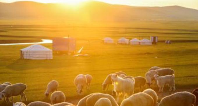Peste bubbonica in Mongolia, scatta l'allerta